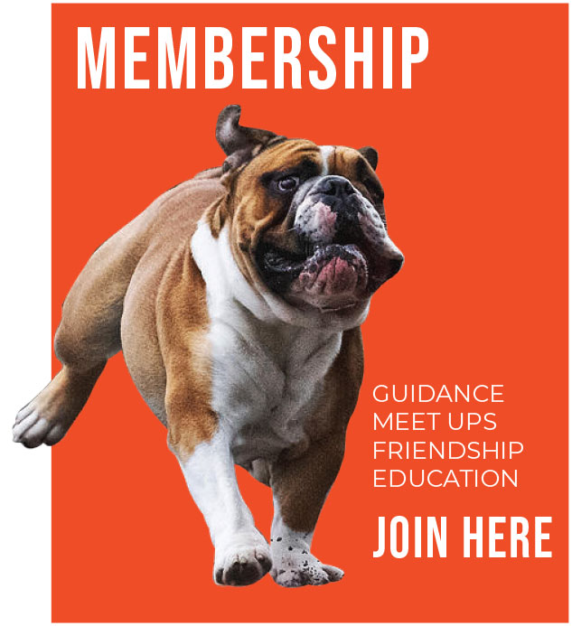Memberships with British Bulldog Club of Victoria