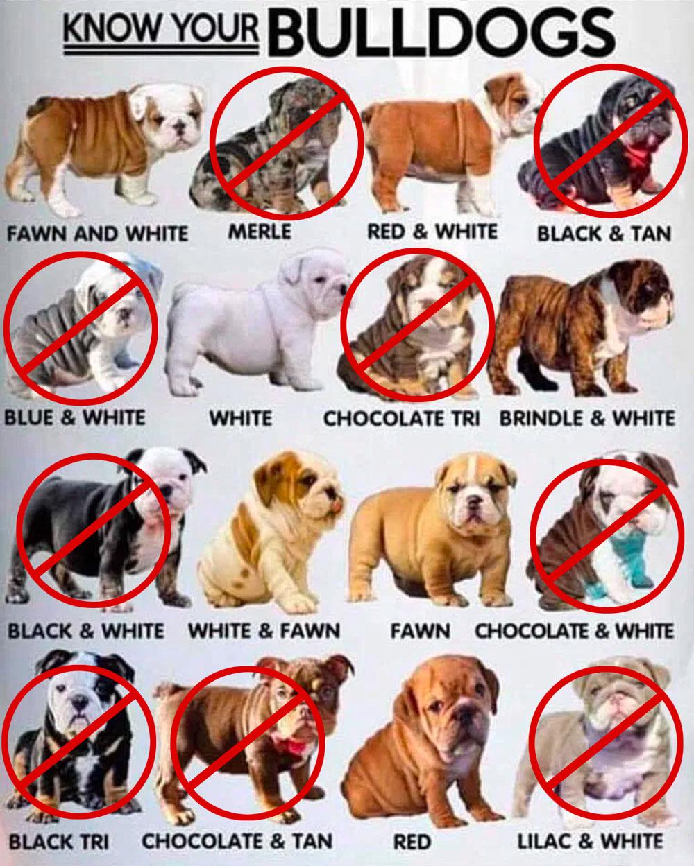 ankc british bulldog colours