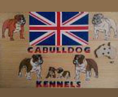 cabulldog kennels