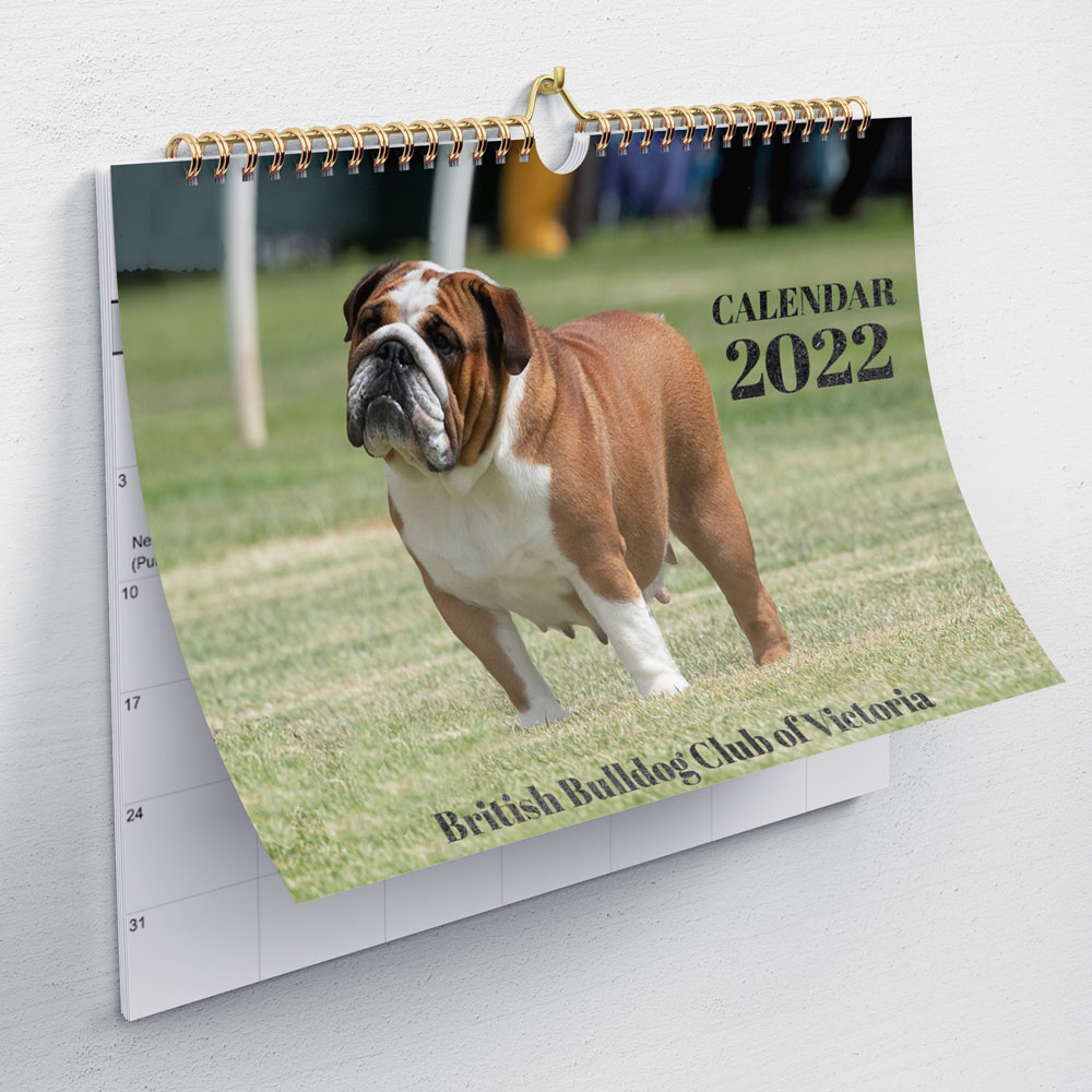 british bulldog calendar for sale